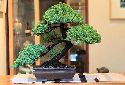 Tips On Buying Bonsai