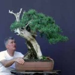 Most Expensive Bonsai And Ficus Ginseng