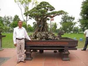 6million dollar ficus ginseng
