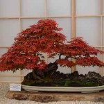 How To Grow A Bonsai From Seed