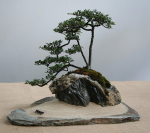 Top Ficus Ginseng Bonsai Accessories That Make Perfect Gifts ...