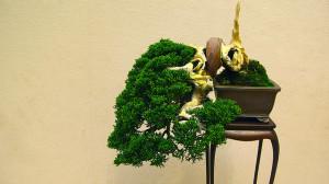 bonsai display tables