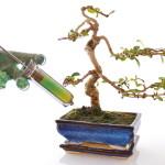wachstum: bonsai erhält spritze in Erde, schutz