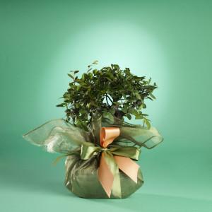 bonsai books the perfect bonsai gift